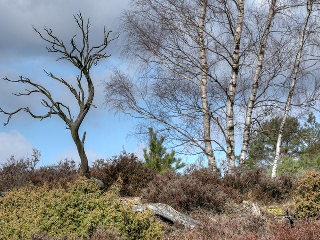Bosrand met een aantal witte bomen
