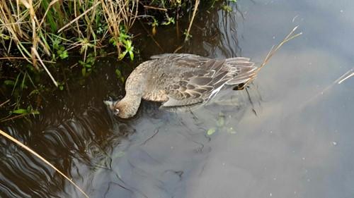 overleden vogel in het water