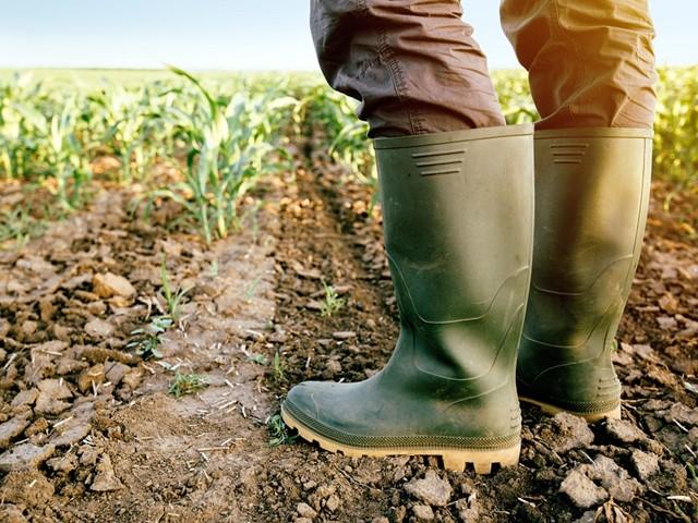 Rubberen laarzen in een weiland met gekiempte planten